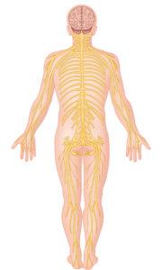 hvad hedder den mindste knogle