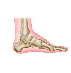 Ossa Pedis fodens knogler