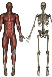 den mindste knogle i kroppen